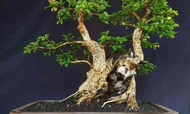 bonsai rukem