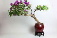 Cara Membuat Bonsai Bunga Kertas